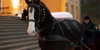 Saani ees hobune Friidom. Aitäh, OÜ Lesta Tallid! Foto: Merle Värv