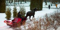OÜ Lesta Tallid, saani ees hobune Friidom. Foto: Merle Värv